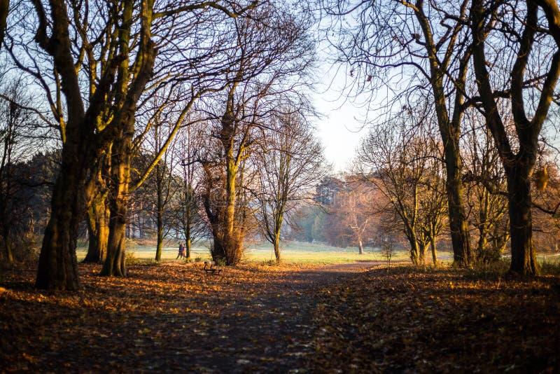 Złota mgła nad Sefton parkiem zdjęcia stock