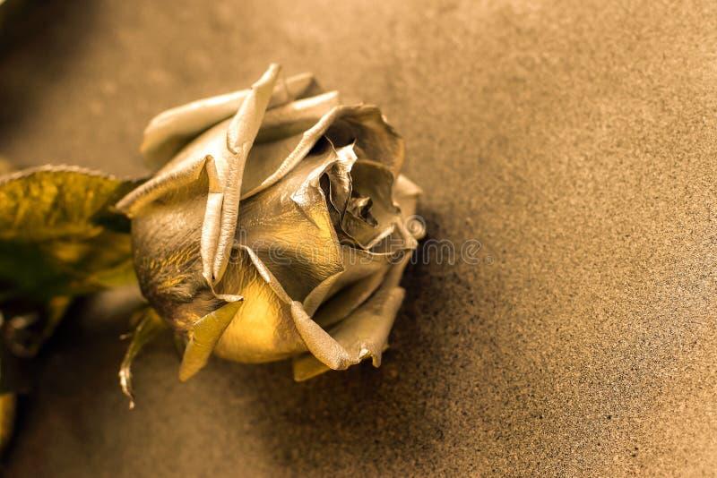 Złota róża na złotym kruszcowym tle zdjęcia royalty free