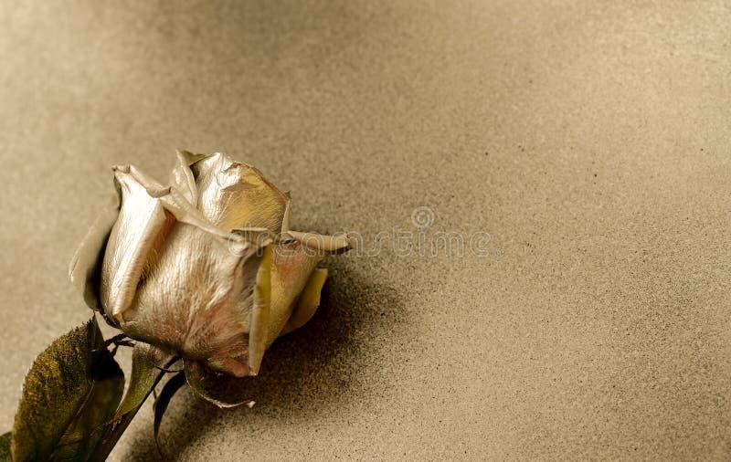 Złota róża na złotym tle zdjęcie royalty free