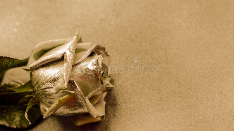Złota róża na złotym tle obrazy royalty free