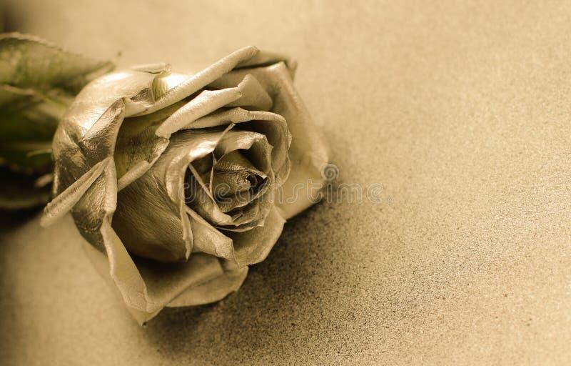 Złota róża na złotym tle obrazy stock