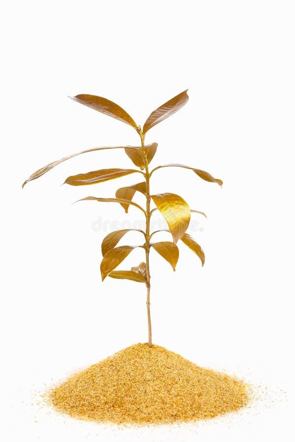 złota roślina zdjęcia stock