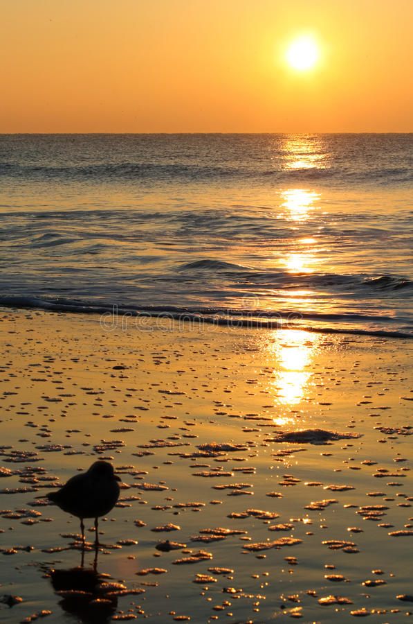 Złota wschodu słońca Seagull mirtu plaża zdjęcia stock