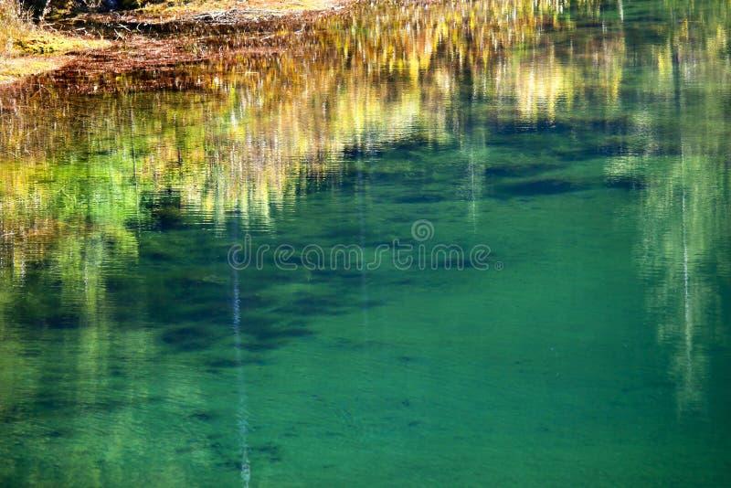 złota zielony jeziorny mech odbicia kolor żółty obraz royalty free