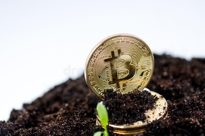 Złote bitcoin monety na ziemi i dorośnięcia roślinie Wirtualna waluta Crypto waluta nowy wirtualny pieniądze zdjęcie royalty free