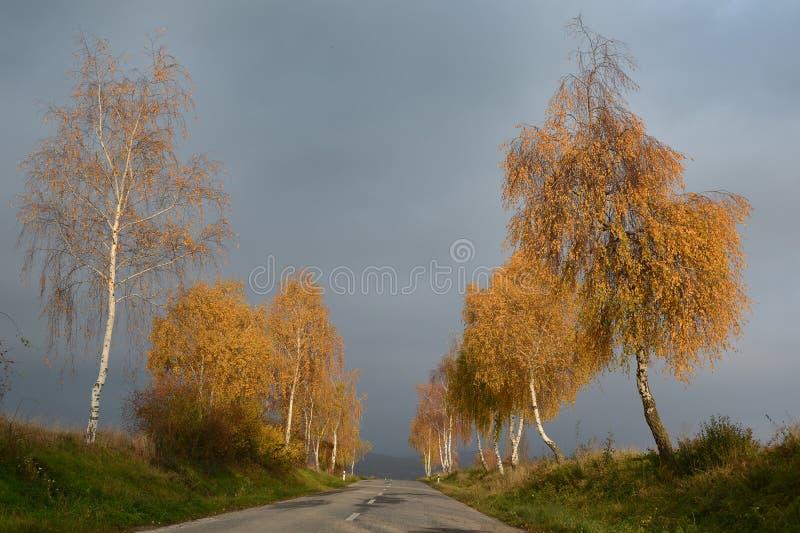 Złote brzozy w spadku drogą z chmurzącym niebem fotografia stock