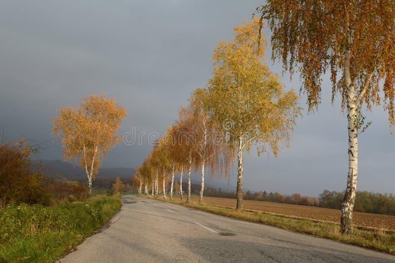 Złote brzozy w spadku drogą z chmurzącym niebem obrazy stock