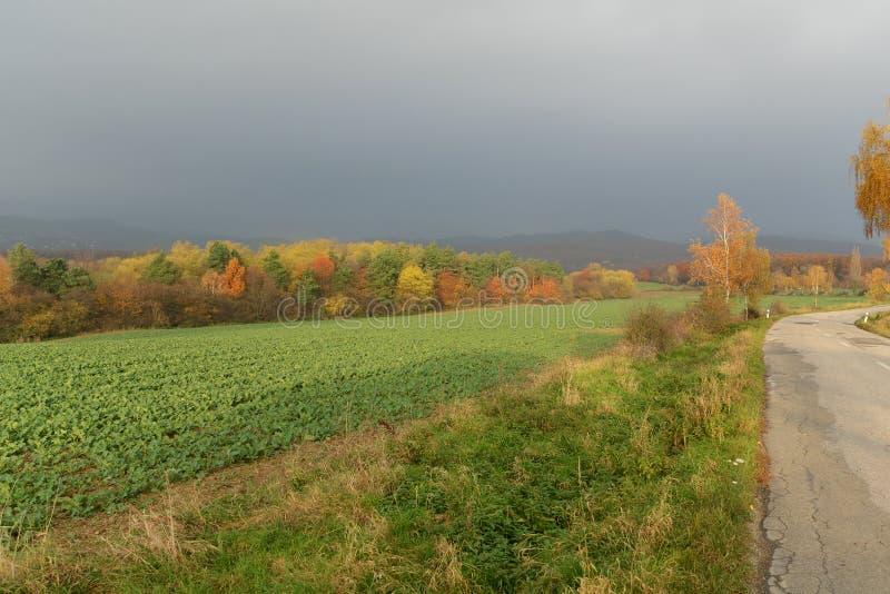 Złote brzozy w spadku drogą z chmurzącym niebem zdjęcie stock