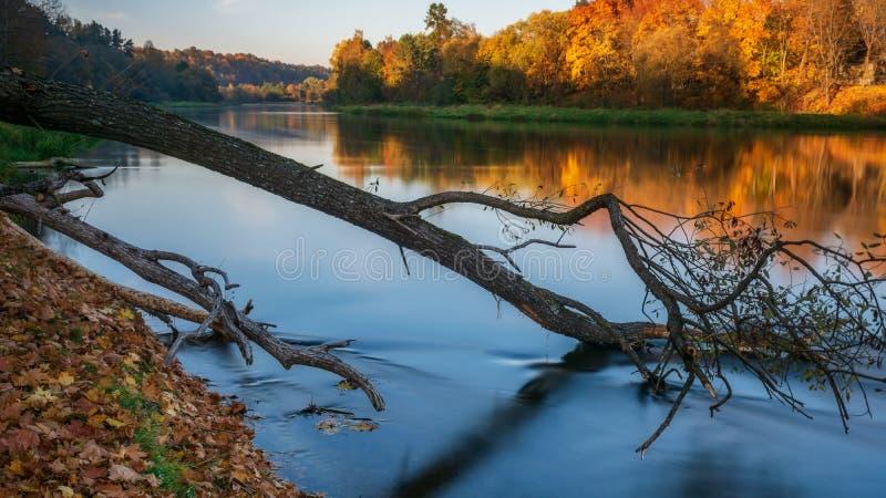 Złote odbicia jesieni w Neris zdjęcia stock