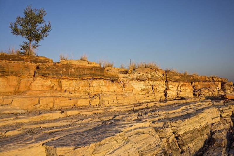 Złote piaskowcowe falezy z drzewem zdjęcia royalty free