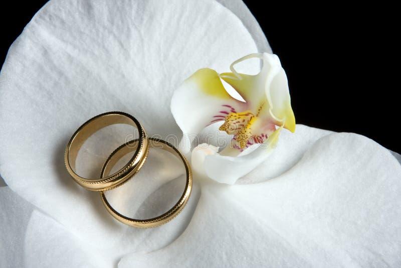 złote pierścienie białych orchidei fotografia royalty free