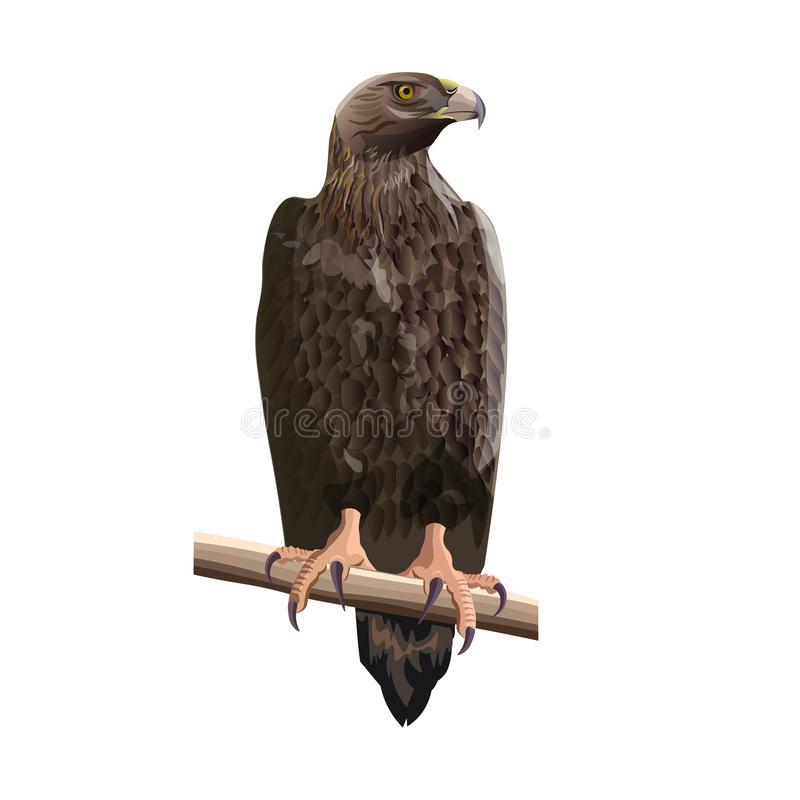 Złotego orła wektor ilustracji