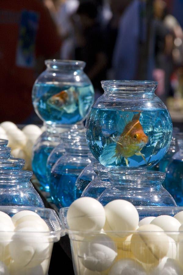 złoto miski ryb obraz stock