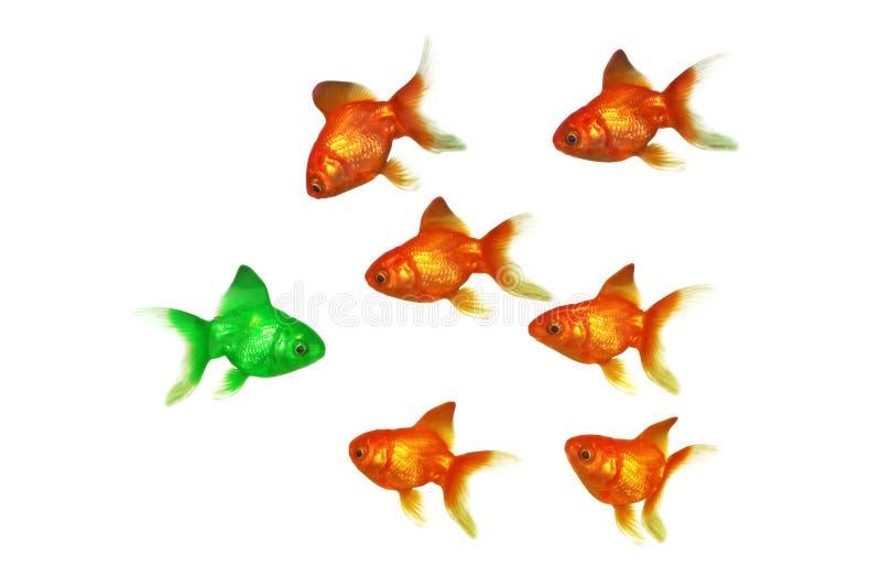 Złoto ryba obraz stock