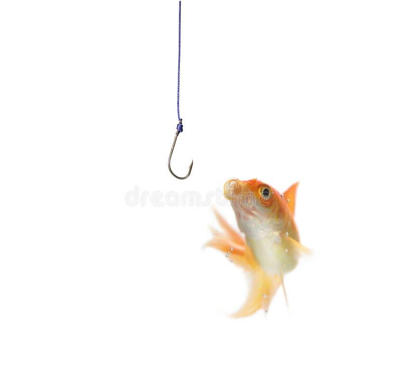 Złoto ryba i opróżnia haczyka obrazy stock