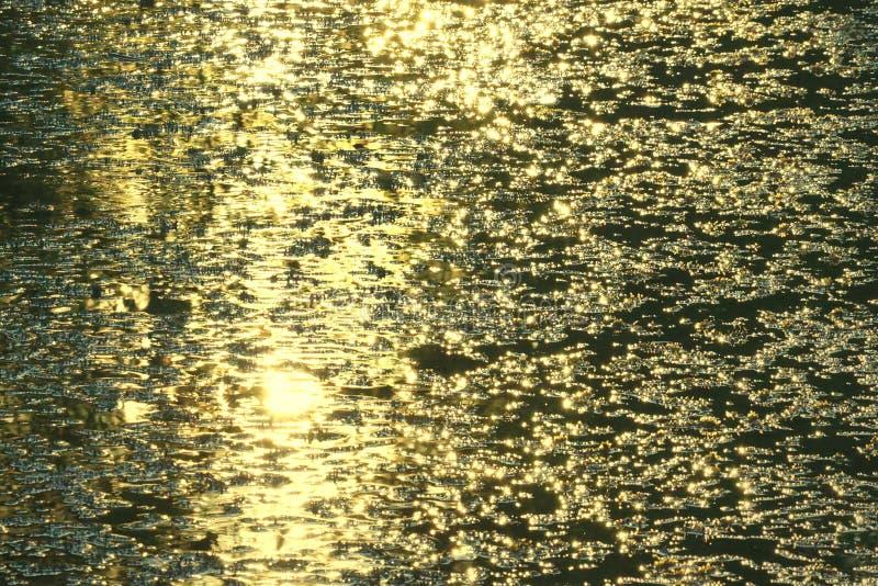 Złoty światło wieczór błyszczy złoto woda w jeziorze obrazy royalty free
