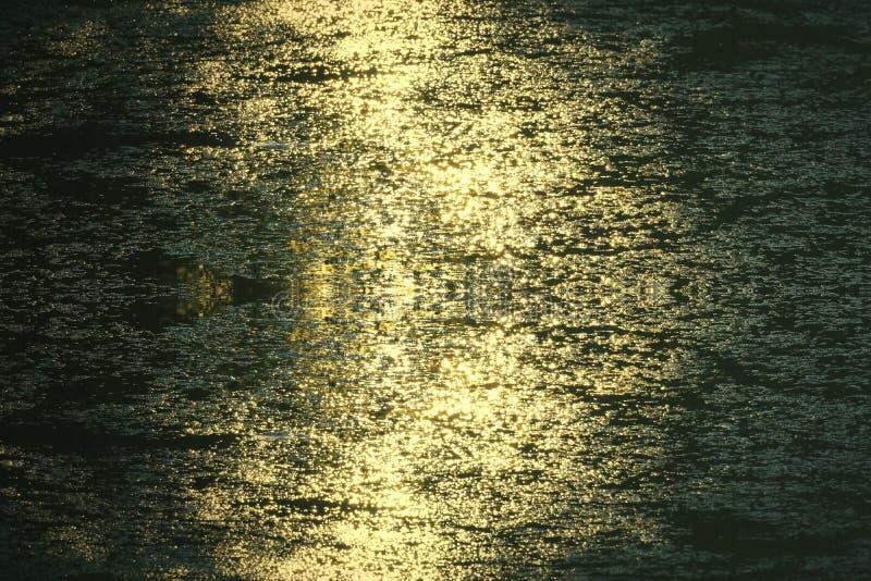 Złoty światło wieczór błyszczy złoto woda w jeziorze fotografia royalty free