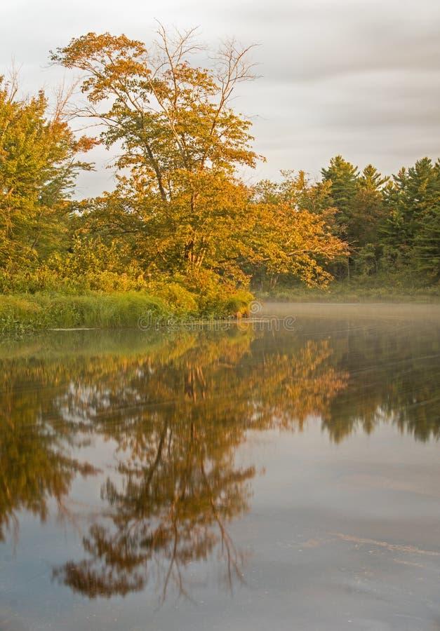 Złoty drzewo Odbijający W rzece zdjęcia royalty free