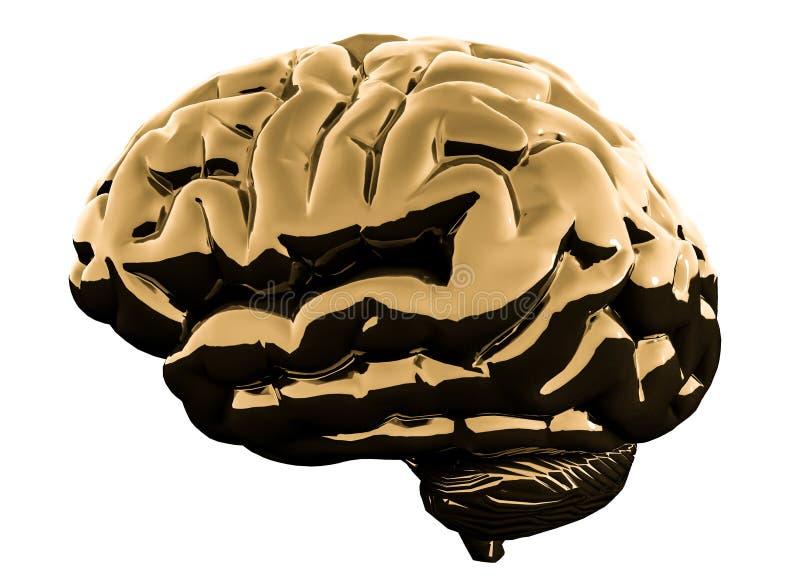 Złoty glansowany mózg odizolowywający na białym tle ilustracja 3 d zdjęcia stock