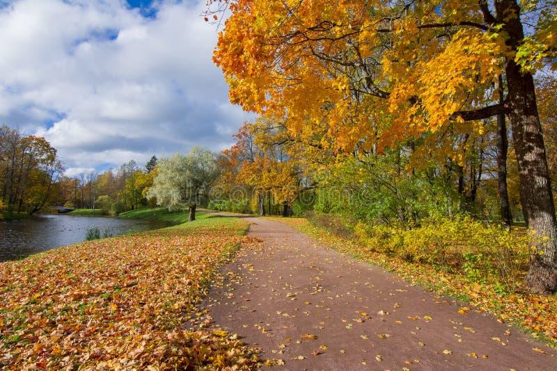 Złoty jesień spadek w Aleksander parku, Tsarskoe Selo, święty Petersburg, Rosja fotografia stock