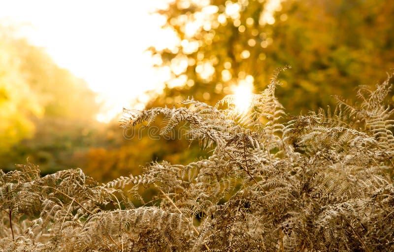 Złoty jesień wschód słońca fotografia stock