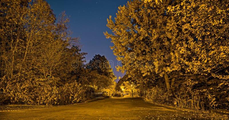 Złoty królewski park w spadek nocy zdjęcia stock