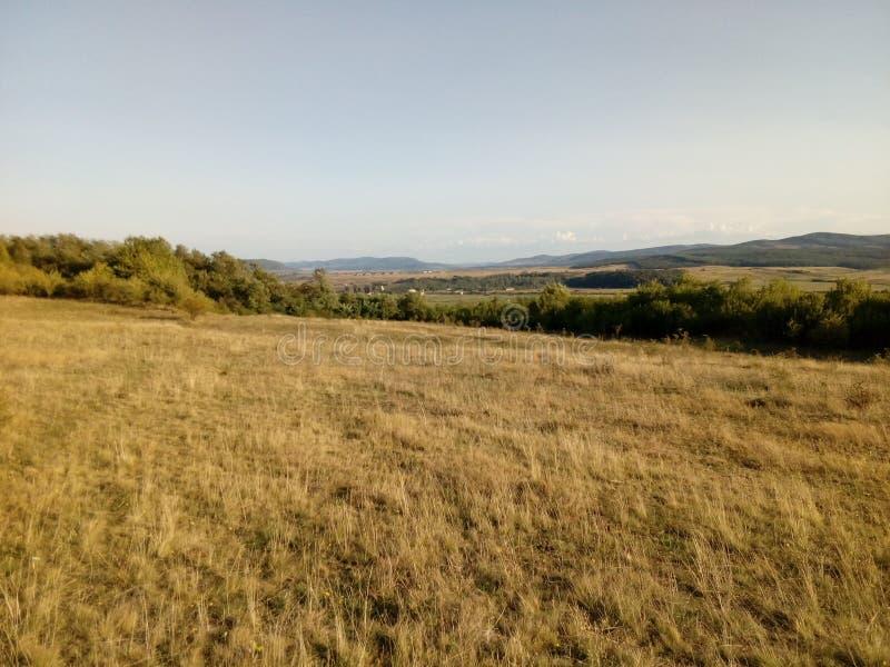 Złoty krajobraz zdjęcia royalty free
