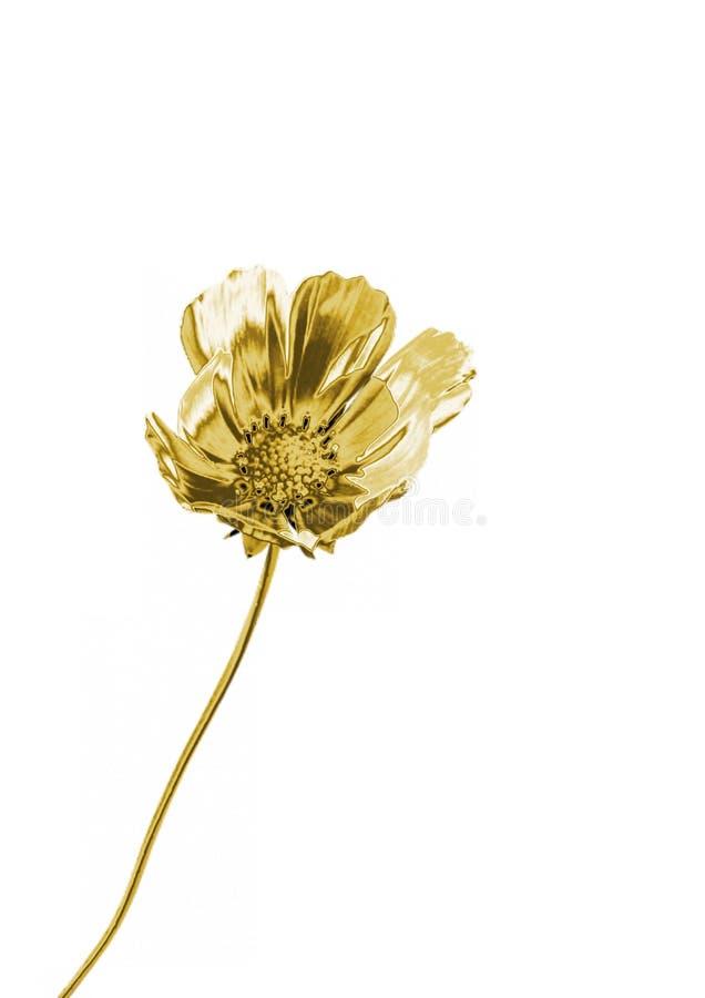 złoty kwiat fotografia royalty free
