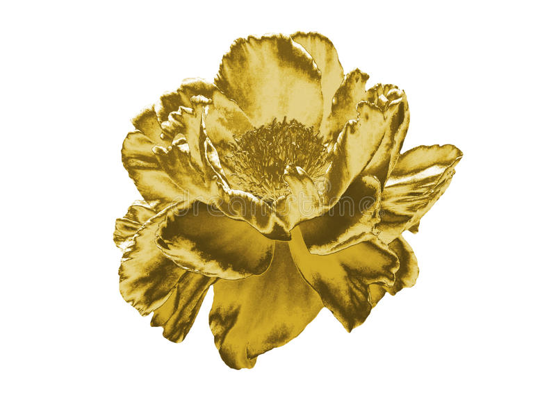 złoty kwiat obraz stock