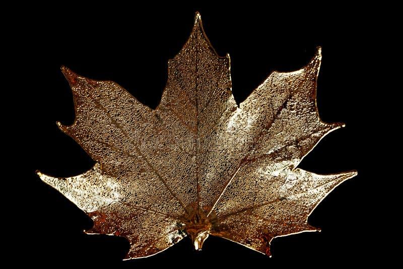 złoty liść klonu fotografia royalty free
