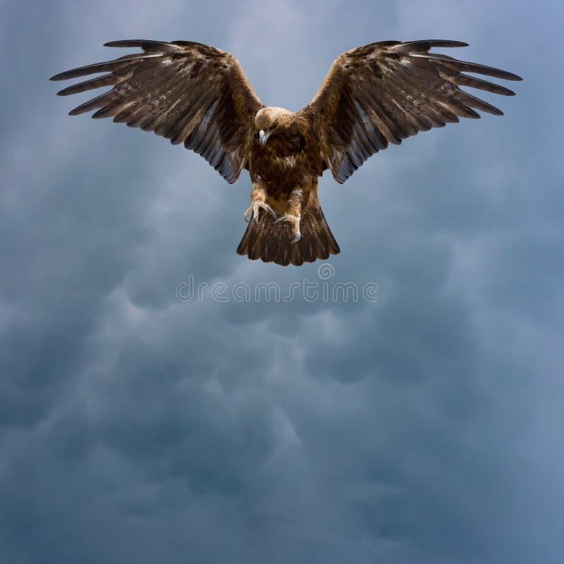 Złoty orzeł w ciemnym niebie zdjęcie stock