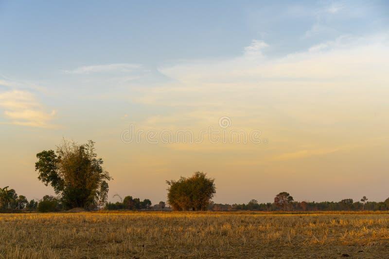 Złoty piękny wschód słońca jasny przy suchej trawy polami i bambusowym drzewem w wsi przy rankiem zdjęcia royalty free