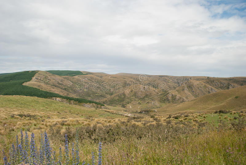 Złoty pole krajobraz z górami zdjęcie stock