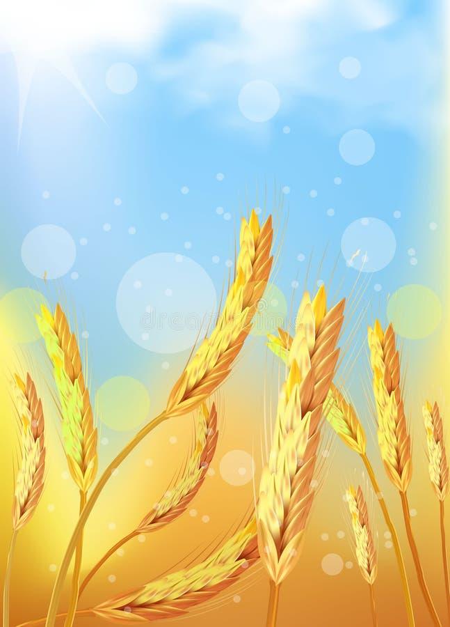 Złoty pszeniczny pole pod niebieskim niebem ilustracji