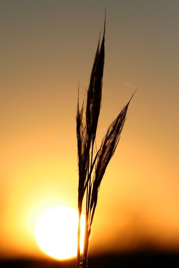 złoty silloue świeciło słońce zdjęcia royalty free