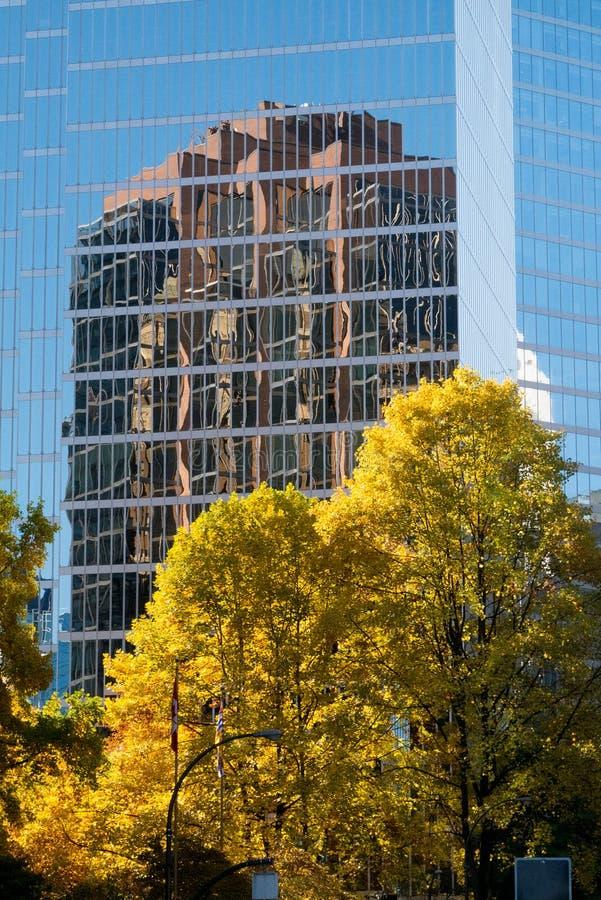 Złoty ulistnienie drzewo kontrastuje ostro z odbiciem nowożytny budynek w tle zdjęcie stock