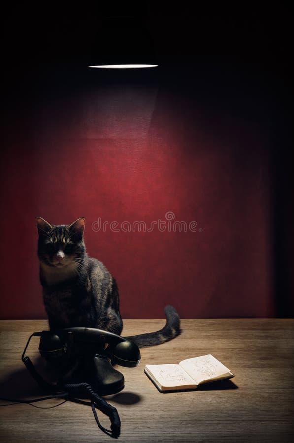Złowieszczy kot z telefonem i notatnikiem zdjęcie stock