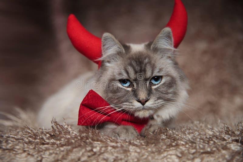 Zły elegancki kot jest ubranym diabłów rogi obraz royalty free
