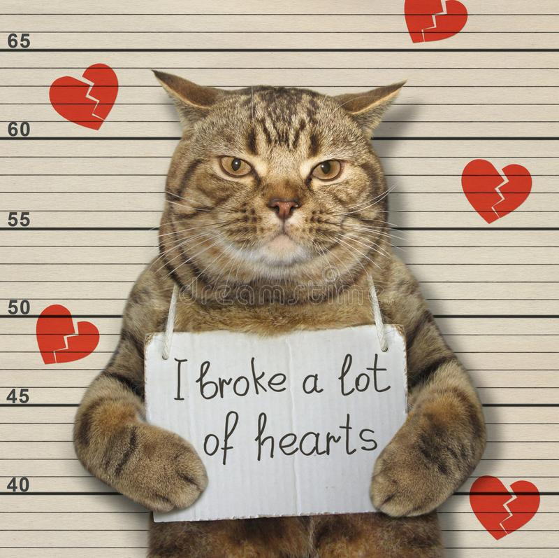 Zły kot łamał serca obraz stock