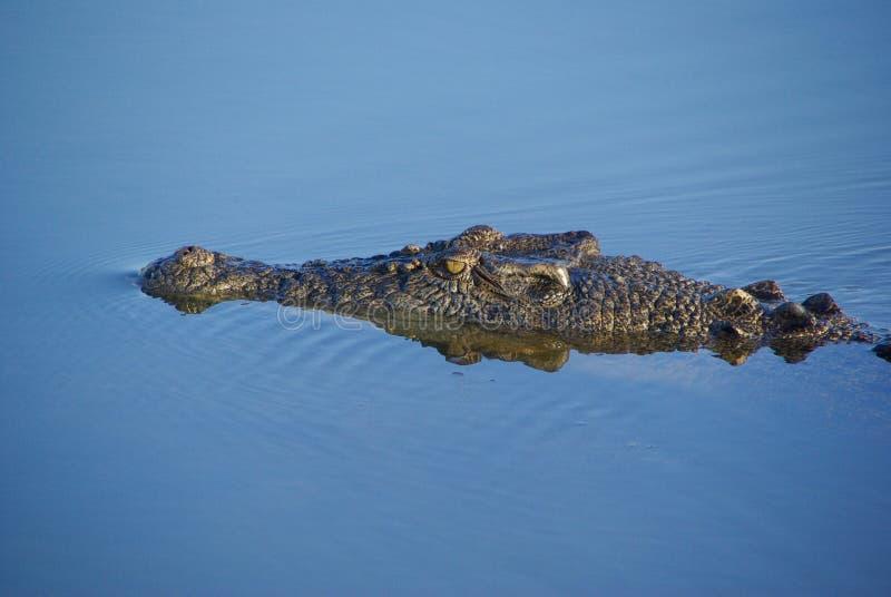 zły krokodyla oko zdjęcia stock