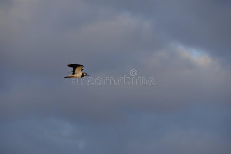 Zły nastrój, ciężkie chmury Zła pogoda, widok dramatyczny, depresja, styl gotycki, tajemnicza koncepcja Ptak latający na ciemnym  fotografia royalty free