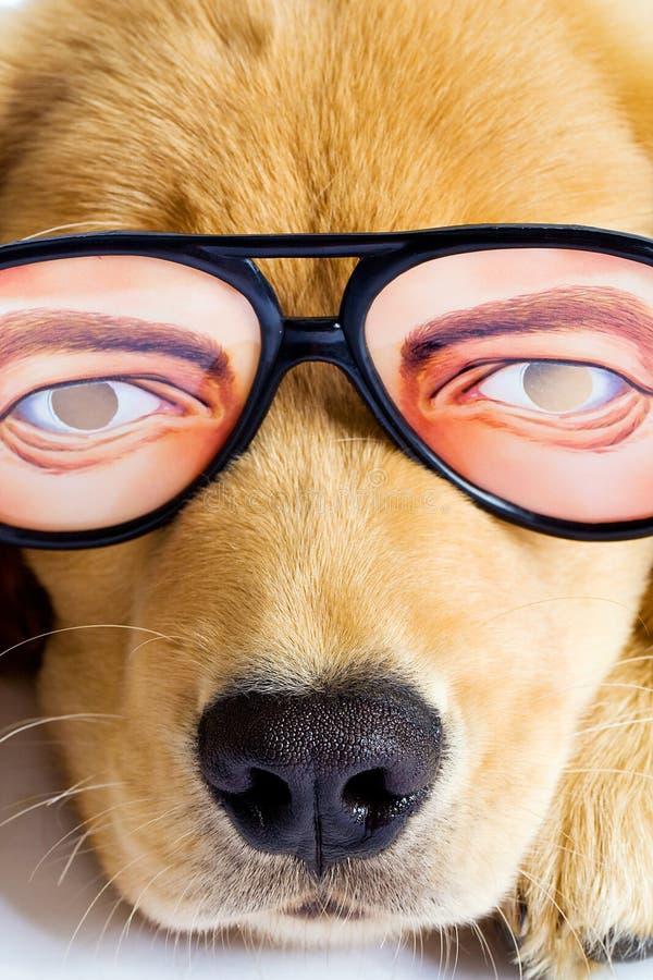 Z śmiesznymi szkłami szczeniaka Pies fotografia stock
