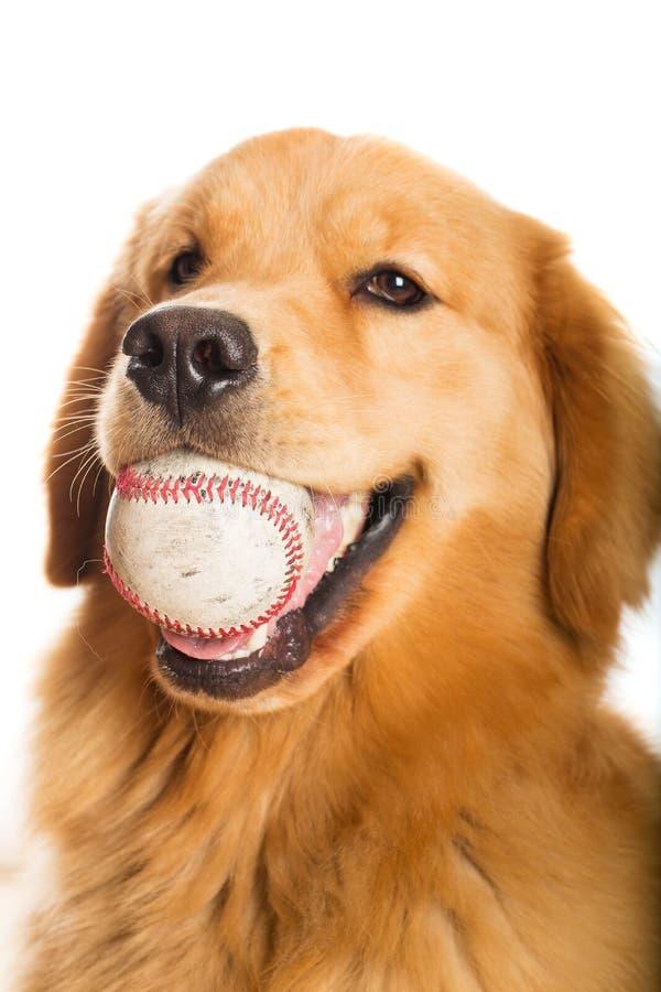 Z baseballem złoty Aporter zdjęcia stock