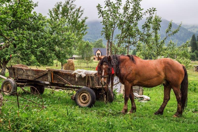 z bliska rural z gospodarstw rolnych Brown koń pasają blisko starego drewnianego furgonu zdjęcia stock