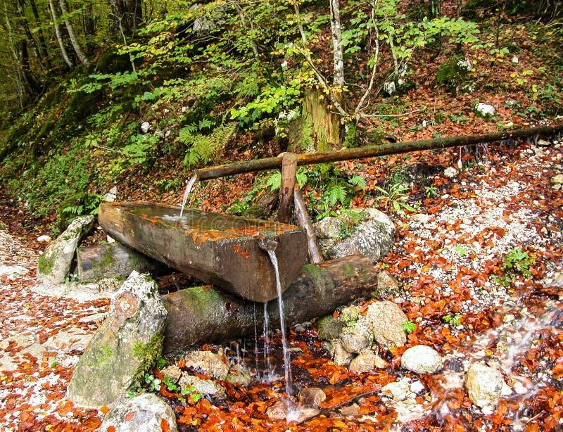 Z drewnianymi kanałami wodna wiosna. zdjęcia stock