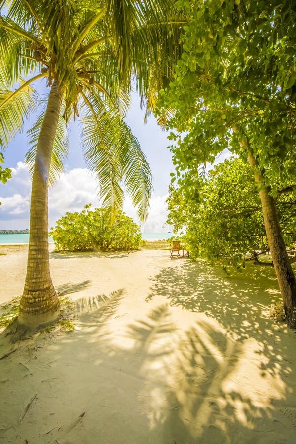 Z drzewami tropikalna plaża fotografia stock