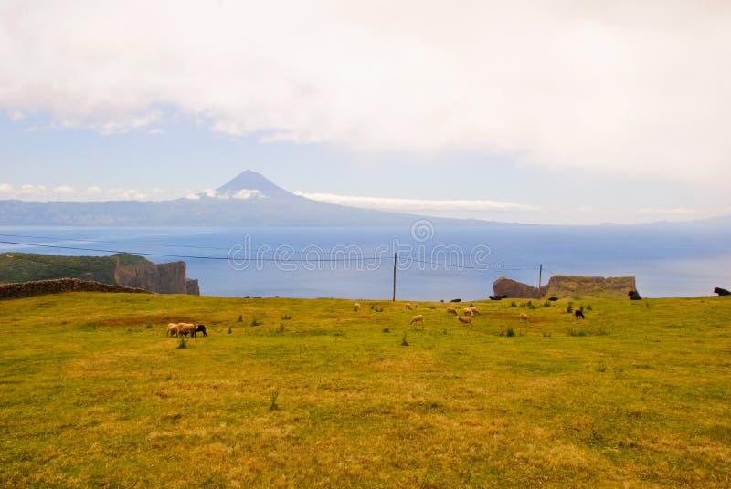Z góra Pico górą paśnika krajobraz obrazy royalty free