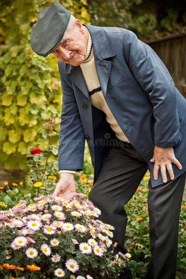 Z kwiatem starszy mężczyzna fotografia royalty free