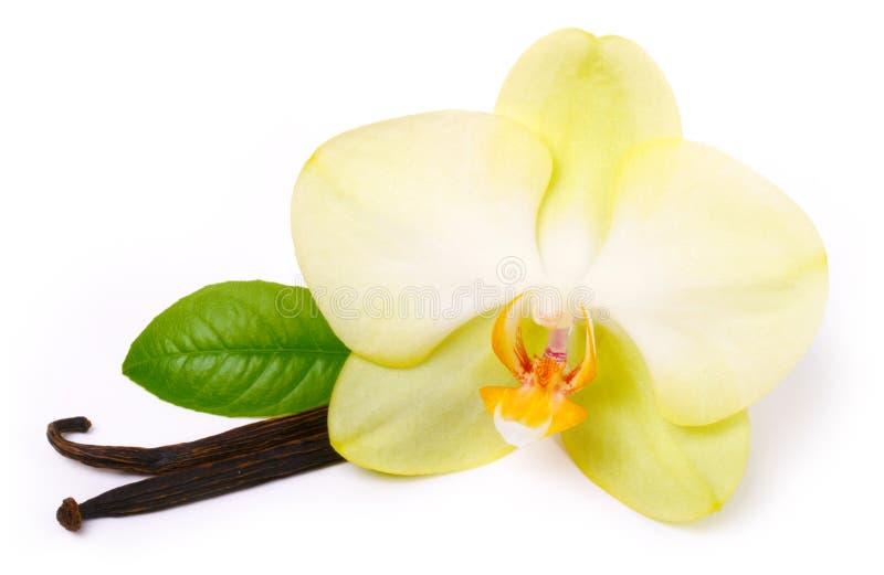 Z kwiatem waniliowi kije zdjęcie stock