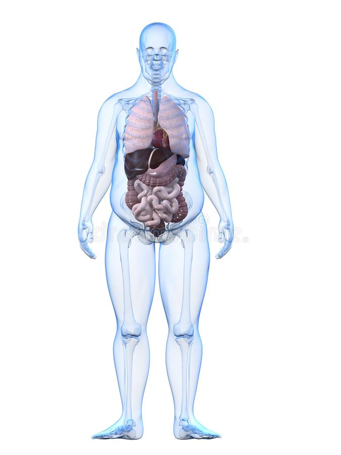 z nadwagą mężczyzna organy royalty ilustracja